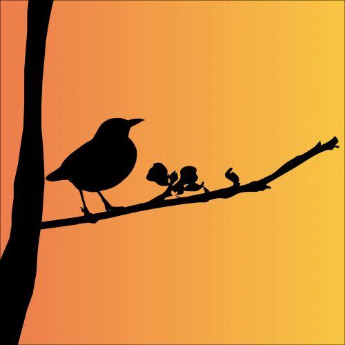 juoda paukštis, paukštis, gyvūnas, juoda, siluetas, medis, filialas, iliustracija, menas, piktograma, simbolis, gražus, oranžinė, dangus, saulėlydis, saulėtekis, Blackbird siluetas