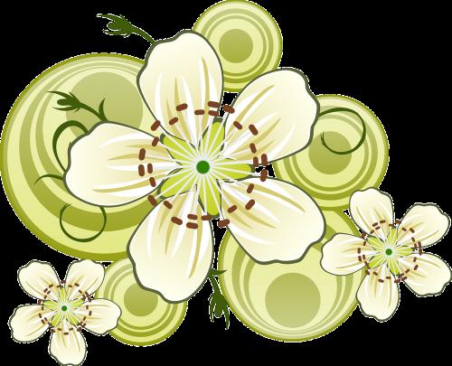 blackthorn flowers bloom