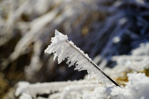 blade of grass hoarfrost snow crystals