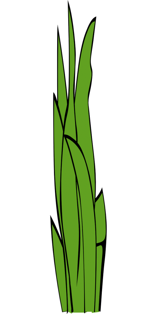 blades of grass,grass,weed,gramineous plant,graminaceous plant,green,plant,free vector graphics