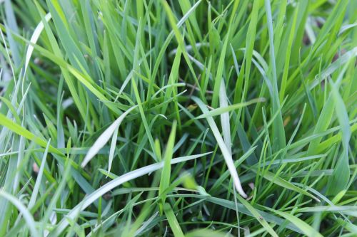 blades of grass meadow pasture