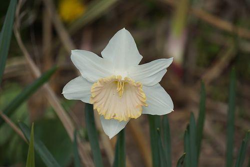 blanc fleur flore