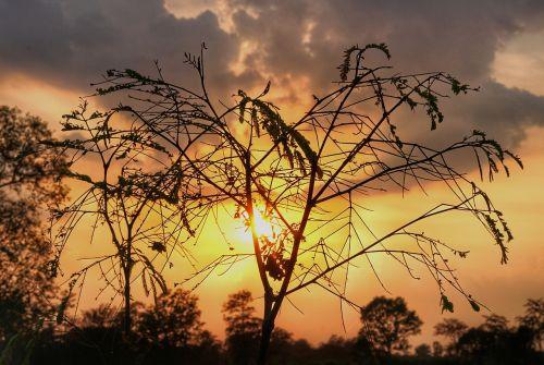 blaze sunset silhouette