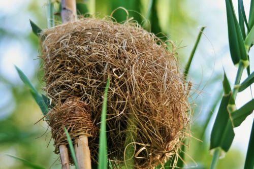 Bleached Weaver's Nest