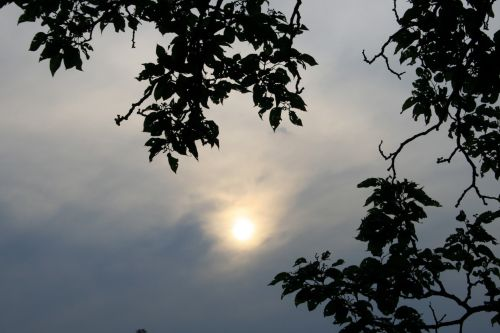 Bleak Sun And Tree