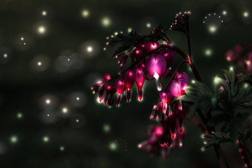 bleeding heart  flower  blossom