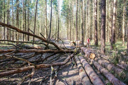 blockage trees dirt
