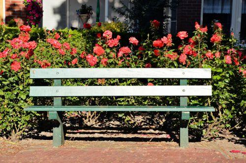 gėlė, sodas, gamta, augalai, apdaila, ornamentu, bankas, gėlių bankas