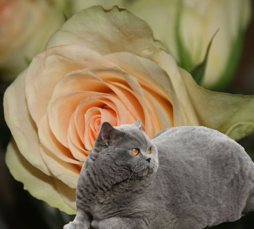 Boris With Flower