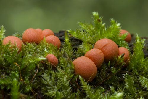 blood milk mushroom slime mold sponge
