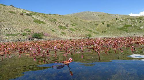 bloom on the lake nero