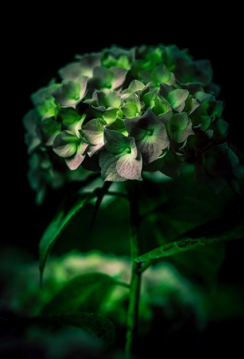 žydėti,žiedas,blur,botanikos,Iš arti,spalva,spalva,flora,gėlė,sodas,gamta,augalas