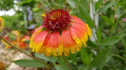 žydėti,gėlė,žiedlapis,pavasaris,žiedas,gamta,gėlių,vasara,sodas,augalas,žydi,lapai,šviežias,spalva,botanika,šviesus,botanikos,makro