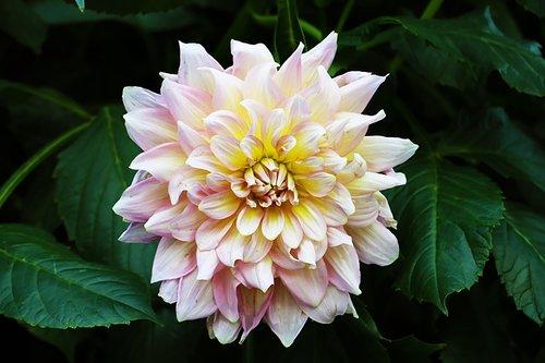 bloom  flora  botany