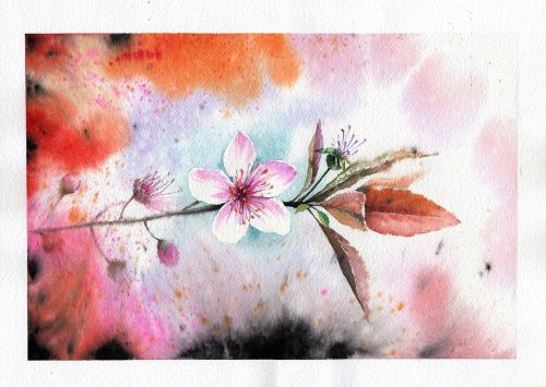again peach flowers flowers
