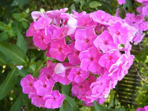 blooms flowers garden