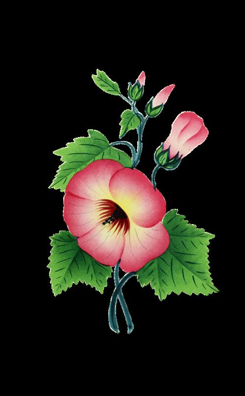 žiedas,žydėti,gėlė,augalas,žydėti,žalias,raudona,izoliuotas,vintage