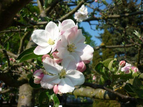 blossom bloom frühlingsanfang
