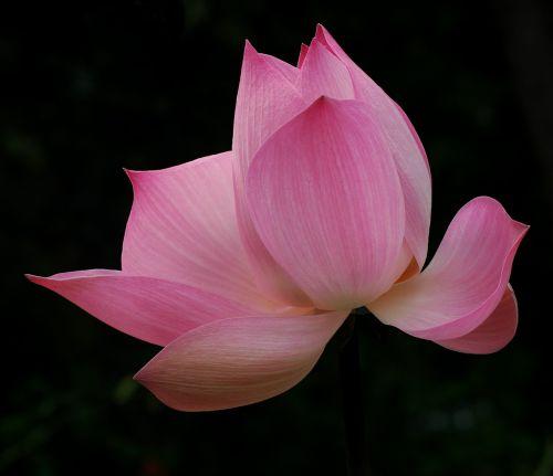 blossom bloom hall