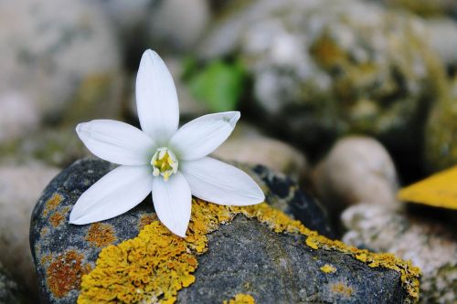 blossom bloom blueme