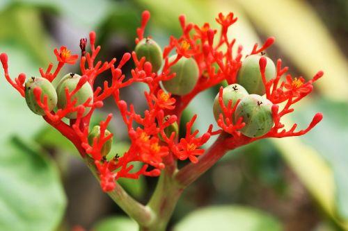 blossom bloom rainforest
