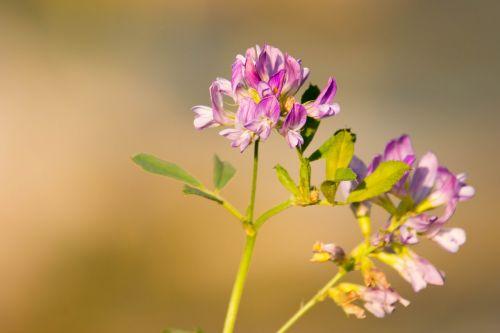 blossom bloom purple