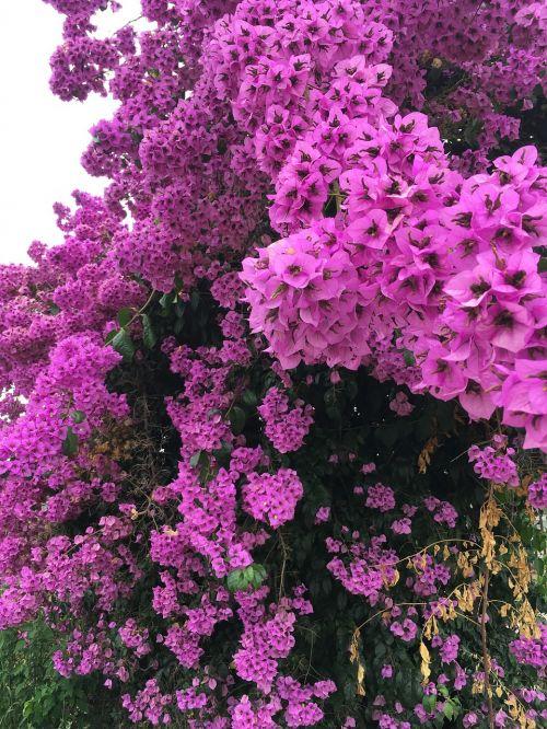 blossom bloom spring