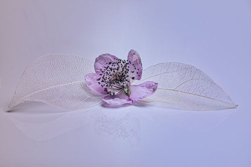 blossom bloom leaf