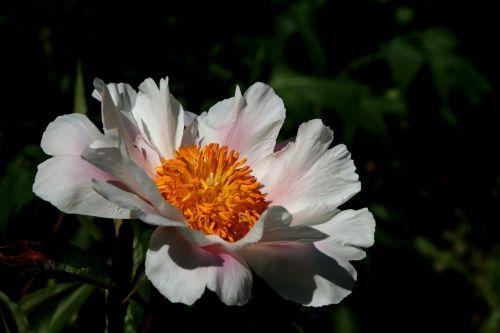 blossom bloom public record