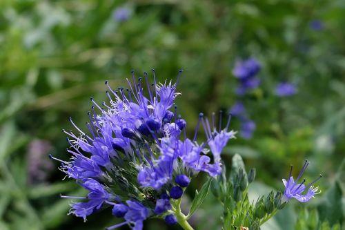 blossom bloom blue