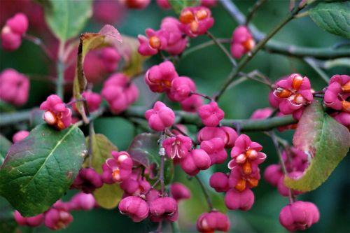 blossom bloom fruit