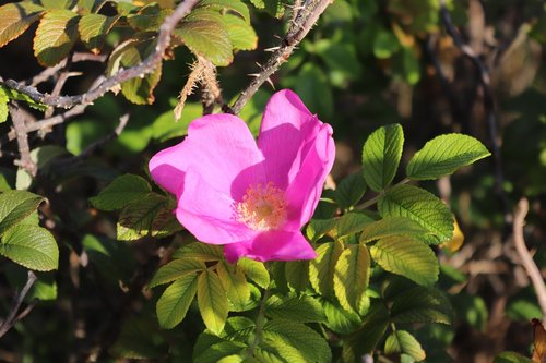 blossom  bloom  nature