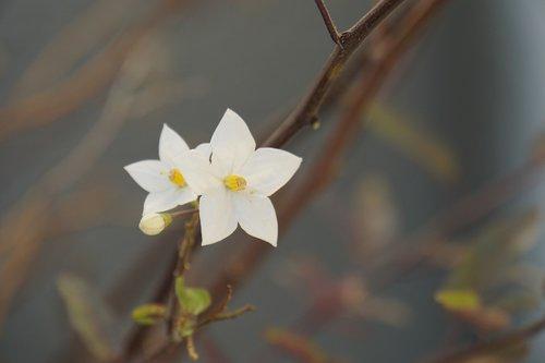blossom  bloom  yasmin