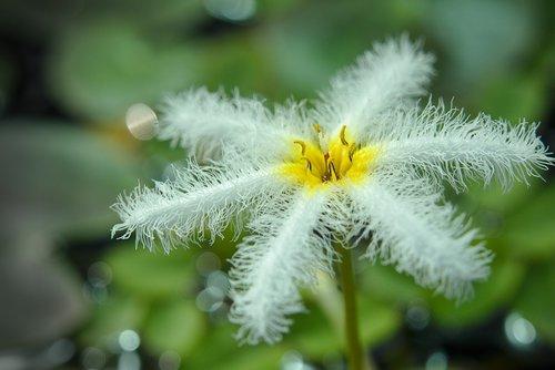 blossom  bloom  filigree