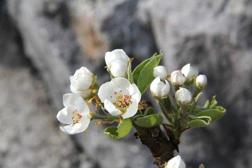blossom  bloom  bulb flowers