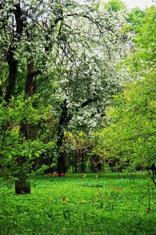 Blossoms,botanical Gardens, Moscow