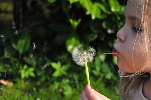 blowball dandelion girl