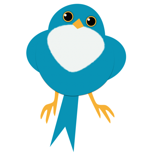 blue bird staring