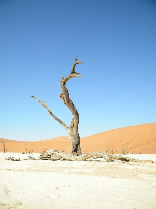 mėlynas,dangus,Namibija,namib,Sossusvlei,miręs,medis,pilka,raudona,kontrastas,smėlis,kopos,vienišas,mąstantis,saulės šviesa,nacionalinis,parkas,deadvlei,turizmas,laukiniai,kraštovaizdis,sausas,sausas,kelionė,tyrinėti,nuotykis