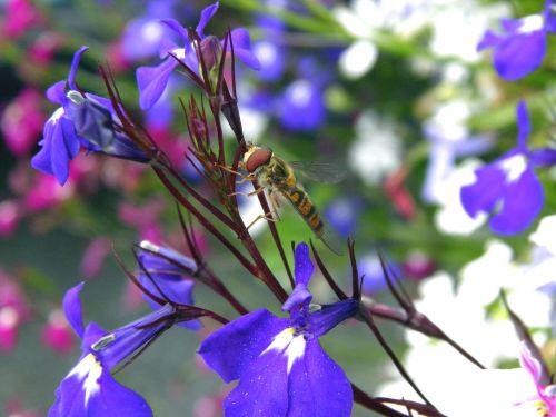 blue flower floral