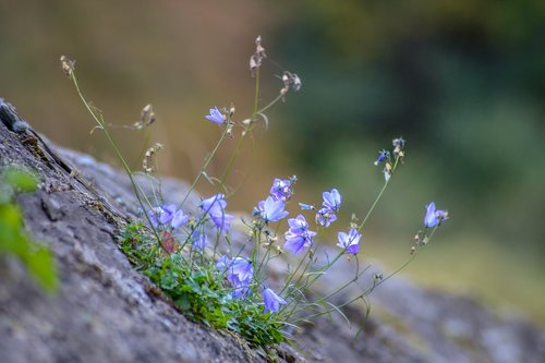 blue  wall  wall flower