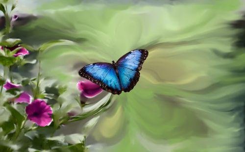 blue butterfly petunia garden green