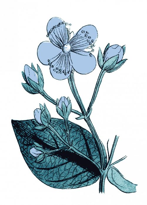 Blue Flower Illustration