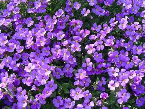 blue flowers blue pillow spring
