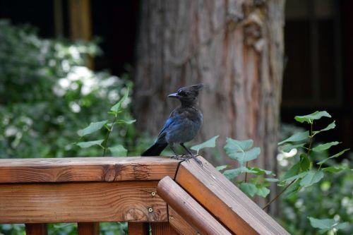 blue jay woods cabin