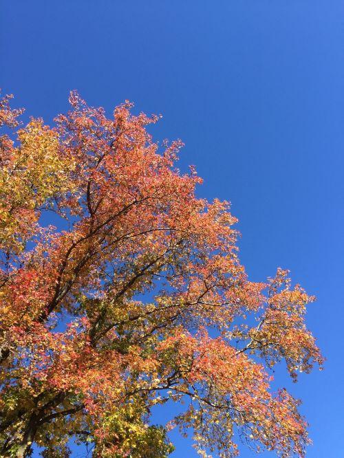 blue sky fall fall leaves