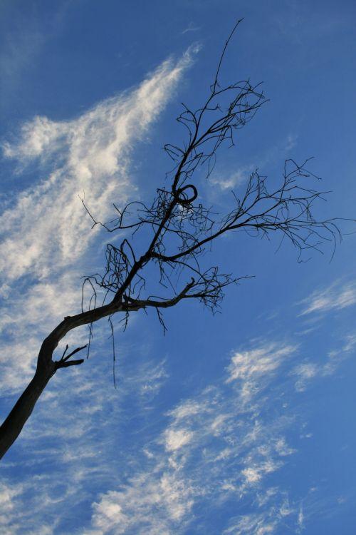 Blue Sky And Twirly Twigs
