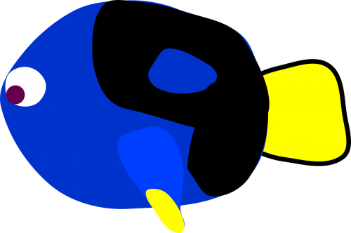 blue tang find fish
