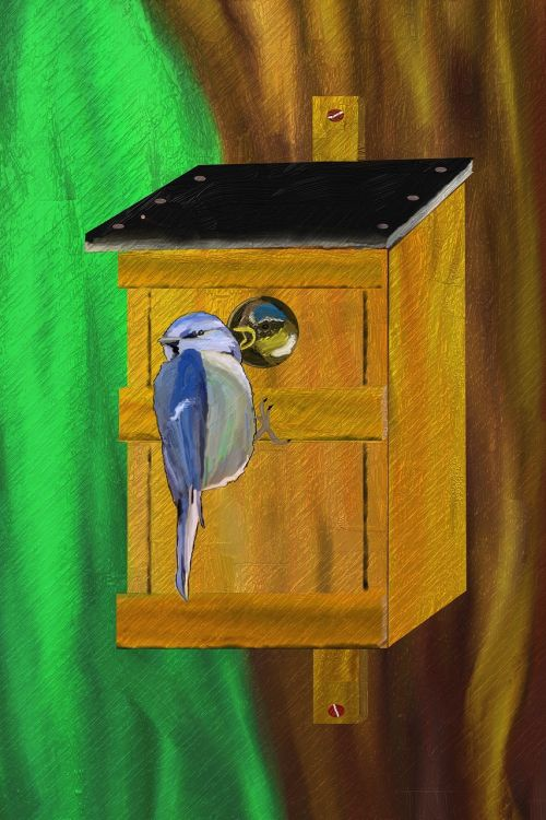 blue tit nesting box nesting place