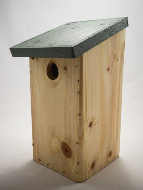 blue tit nest box nest box bird box